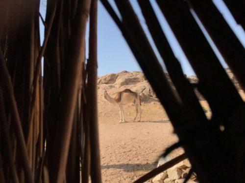 KOLIKO MOŽE BITI UZBUDLJIVO LETOVANJE U EGIPTU – Hurgada nije samo vreli pesak i tirkizno more